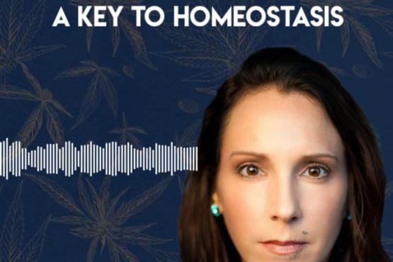 Integrating CBD into Functional Medicine: A Key to Homeostasis